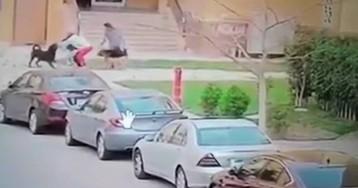 Una mujer protege a un niño del ataque de dos perros con su propio cuerpo