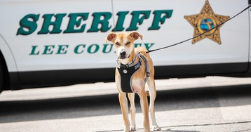 """Florida dog found with mouth taped shut adopted by sheriff's office, """"deputized"""""""