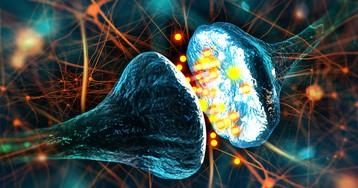 Старость в голове: до какого возраста мозг производит новые нейроны?