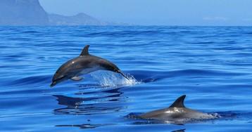 У выбрасывающихся на берег дельфинов-афалин в мозге найдены нейротоксины