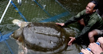 One of last four giant softshell turtles dies in Chinese zoo