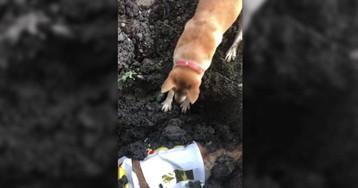 Un perro intenta despertar a su compañera fallecida