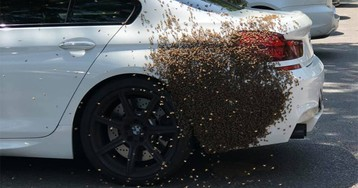 Swarm of bees discovered on car in Virginia, prompting response from fire officials