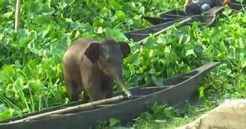 Baby elephant rescued from lake in India – video