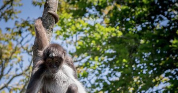 Mammals Are Dying at an Alarming Rate Even in Unpolluted Forests