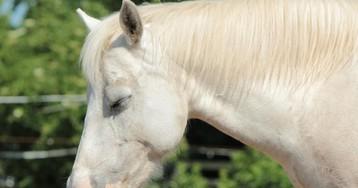 Как лошади спят стоя