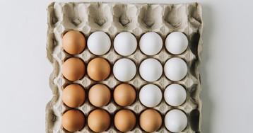 Коричневые или белые? В чем разница между яйцами разного цвета?