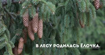 Подлежащее в русском языке: подлежащее как член предложения