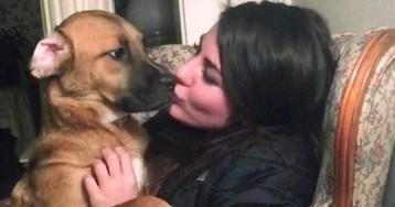 Maine's top court decides dog's owner in odd, bitter custody dispute