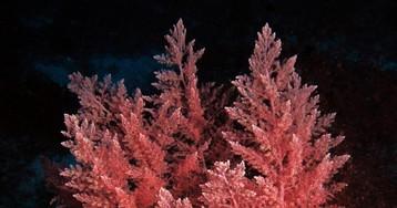 Половину всего кислорода ватмосфере производят водоросли