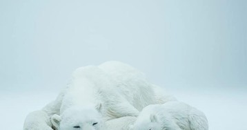 You Can Live with These Life-Sized Polar Bear and Cub Sculptures That Feel Like the Real Thing