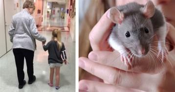 Девочку заразили смертельно опасной болезнью ручные крысы