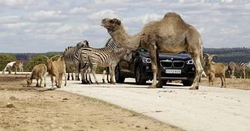 El otro zoo de Madrid es un Safari a media hora del centro