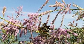 Запорожскую область заполонили бабочки из Африки — фото