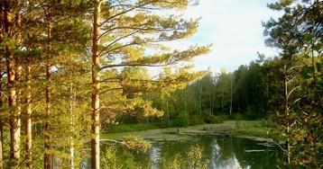 Экологическая повестка в Томской области