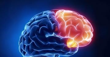 Всё что хочет мозг — есть, спать иразмножаться
