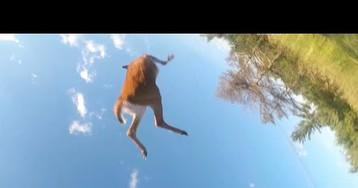 Un motorista sale volando tras chocar contra un ciervo