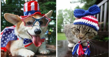 These Super Cute Animals Are All Dressed up And Ready to Celebrate 4th of July