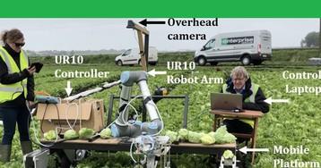 Робот Vegebot соберет урожай салата в любую погоду