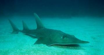 IUCN red list reveals wildlife destruction from treetop to ocean floor