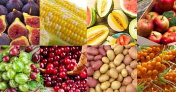Сезонные продукты августа: делаем покупки с пользой для здоровья и кошелька
