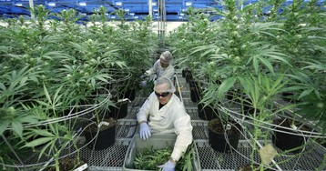 Major universities are starting to offer cannabis degree programs