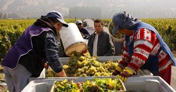 El corazón de los vinos de Chile