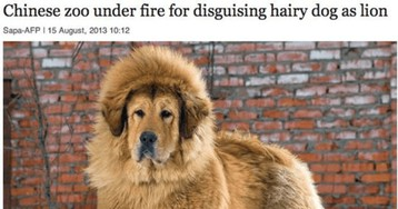 10 Funny Times Dogs Made It To The News Headlines