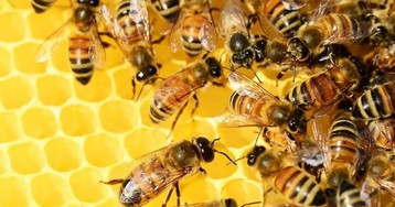 Как выбрать правильный мёд на фоне пчелиного мора