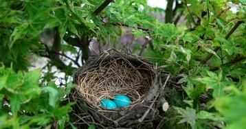 Быстрое создание CRUD с nest, @nestjsx/crud и TestMace