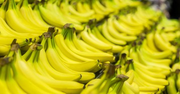 An Unstoppable Fungus Might Make Bananas Go Extinct