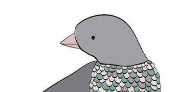 Анекдот про свидание голубей