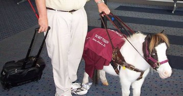 Miniature Horses Are Still Allowed to Be Your Emotional Support Animal
