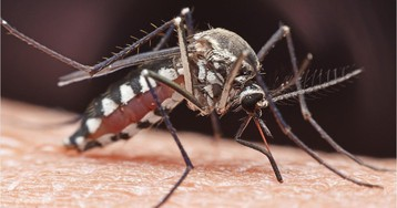 Deadly mosquito-borne virus found in second Massachusetts resident, state health officials say