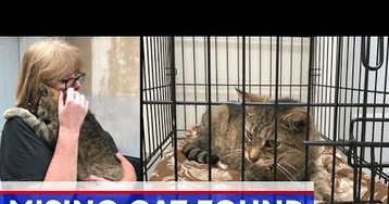 Cat Missing For 11 Years Finally Reunites With Owner