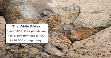 Animals That Were On The Brink Of Extinction And Are Now Thriving