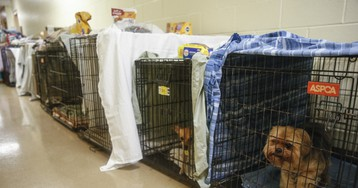 Jacksonville Humane Society finds homes for 250 dogs and cats before Hurricane Dorian hits Florida