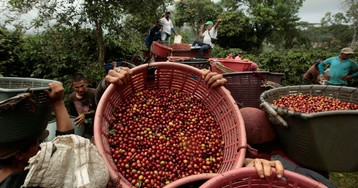 The coffee plantations of India's western ghats are being wrongly blamed for climate change