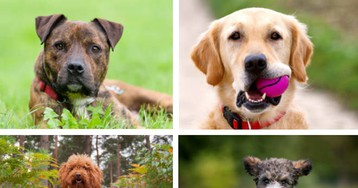 Study Scanned The Brains Of 33 Dog Breeds And Proved How Centuries Of Breeding Reshaped Its Structure