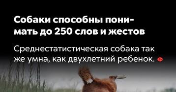 Собаки способны понимать до250слов ижестов