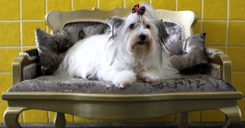 Heads Up For Tales is raising millions as Indian pet parents pamper their pooches