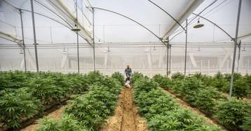 Ecuador aprueba el uso y producción de cannabis con fines medicinales