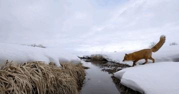 Павел Константинов: «Весь лед растает, но теплее не станет»