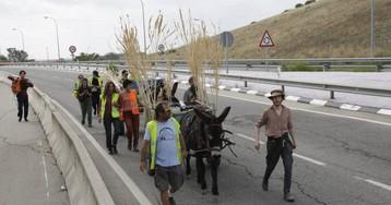 Entrar a Madrid en burro