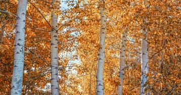 День осеннего равноденствия в 2019 году: народные приметы и ритуалы