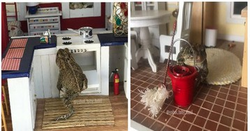 Instagram Page Follows The Daily Life Of Toby The Toad Living in a Dollhouse