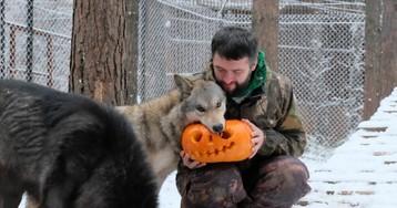 """Бизнесмен, приручивший волков, набирает популярность в """"Инстаграме"""" (13 фото)"""