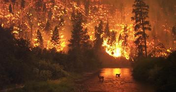 Алексей Ярошенко: «Важно не тушить пожары, а предотвратить их в следующем году»