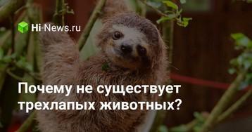 Почему не существует трехлапых животных?
