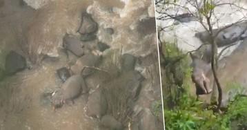 Пять слонов утонули, пытаясь спасти слоненка из бурлящего водопада